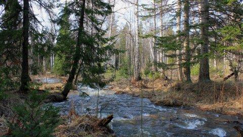 Лес, деревья, река, поток, пейзаж