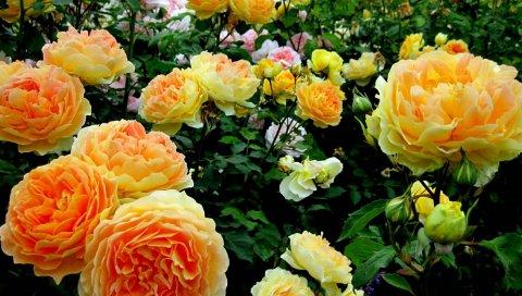 Цветы, цветок, растение, цветение