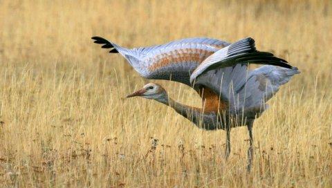 Птица, поле, трава, подметать