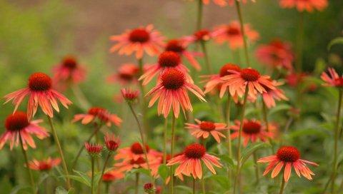 Цветы, трава, красивые, поле