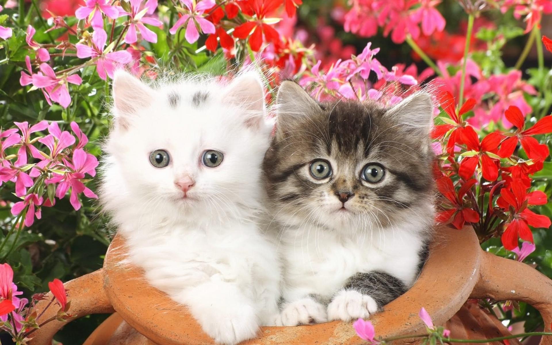 Картинки Котята, паровой горшок, цветы фото и обои на рабочий стол