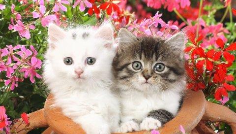 Котята, паровой горшок, цветы