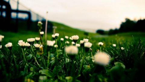 Цветы, трава, макро, темно