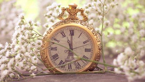 цветы, карманные часы, макро, маленький, белый