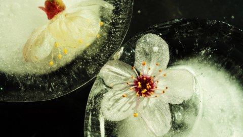 цветы, стекло, растения, цветение