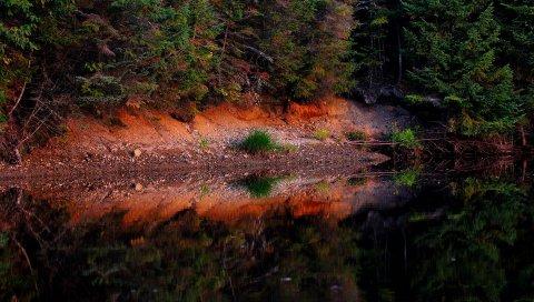 пруд, лес, деревья, пейзаж