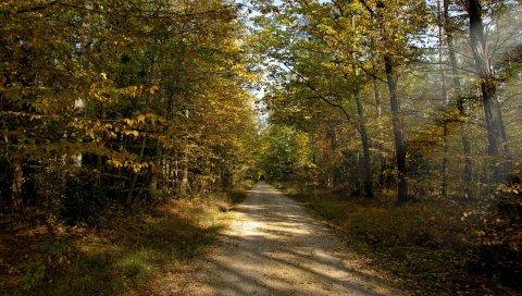 дорожки, дерева, лето