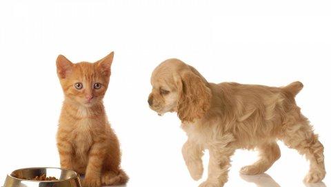 котенок, щенок, миска, еда, друзья