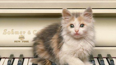 котенок, пушистый, взгляд, пианино