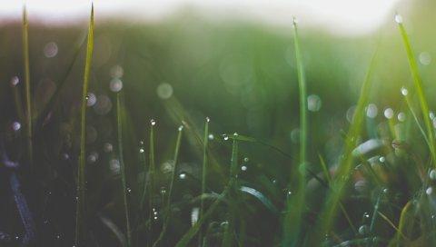 Трава, блики, свет