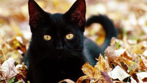 Котенок, кошка, лицо, осень, листья