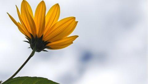 Лепестки, цветы, растения