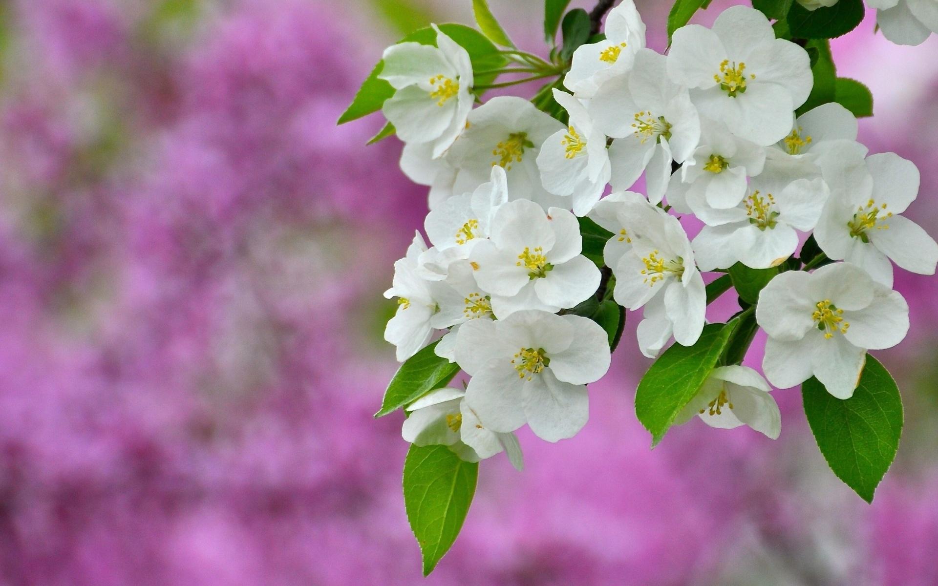 Картинки Цветы, цветение, растение фото и обои на рабочий стол