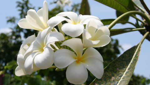 Цветы, лепестки, ветки, растения