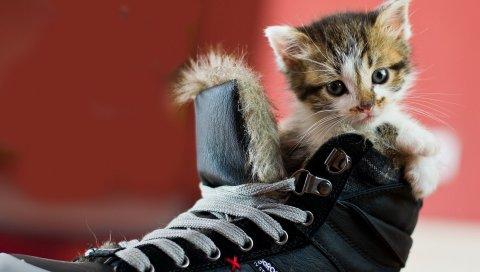 Котенок, обувь, пятнистый