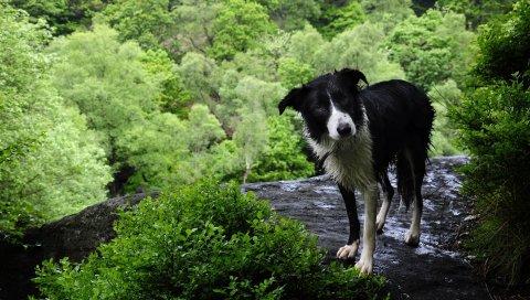 собака, мокрый,трава