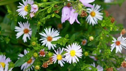 цветы, растения, травы, лепестки