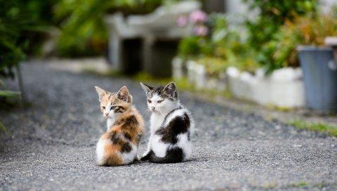 котята, пара,сидеть