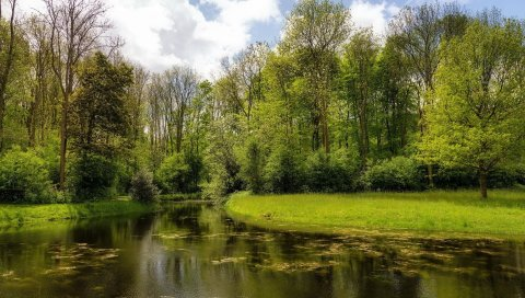 лето, река, природа, трава