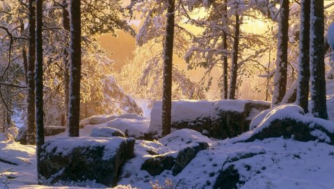 зима, деревья, лес, тень