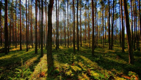 дерево, свет, тень, лесные