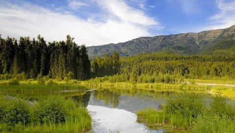 трава, лето, река, пейзаж
