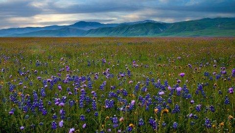трава, небо, лето,красивые, цветы