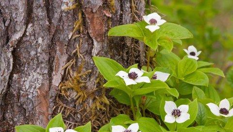 цветы, дерево, кора, листья