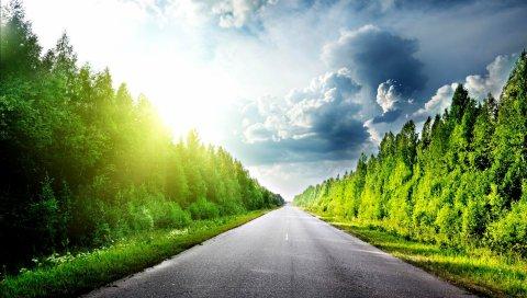 дорога, лето, деревья
