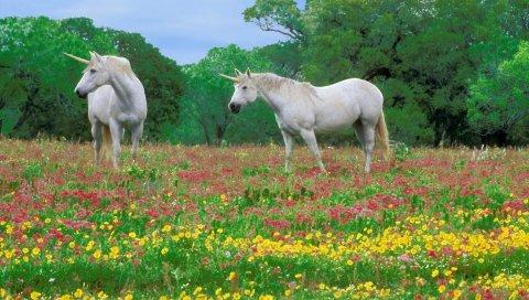 Лошади, трава, поле, цветы