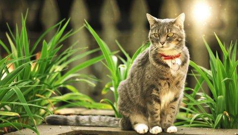 Кошка, трава, прогулка, красивая, светлая