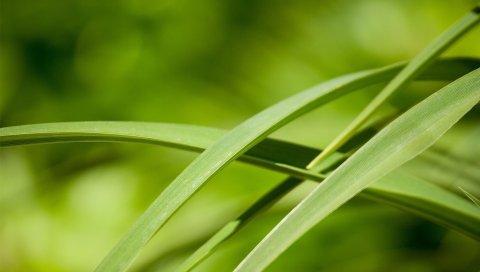 Листья, трава, зеленый