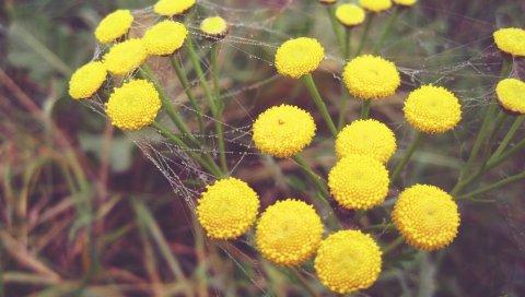 Капли, паутины, цветы