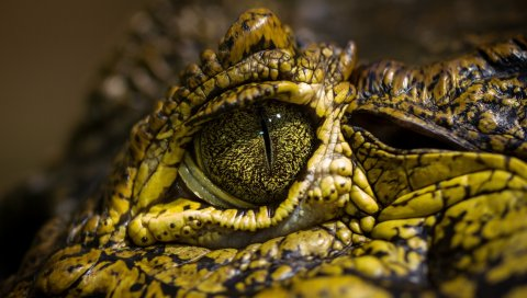 Крокодил, глаза, пятна