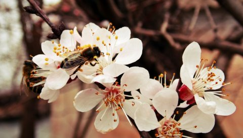 Пчела, цветок, ветка