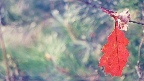 Лист, дуб, ветка, осень