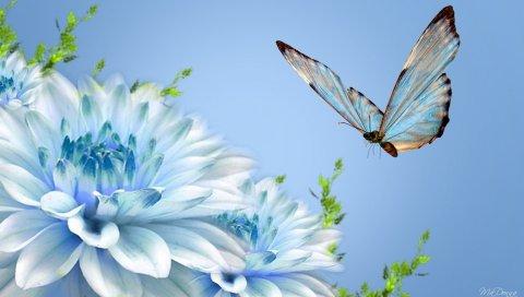 Бабочка, цветок, полет, макро