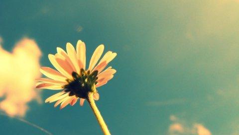 лето, сезон, цветы, растения, небо, облака, лето