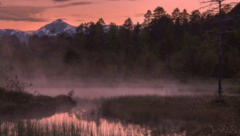 река, трава, туман, лес