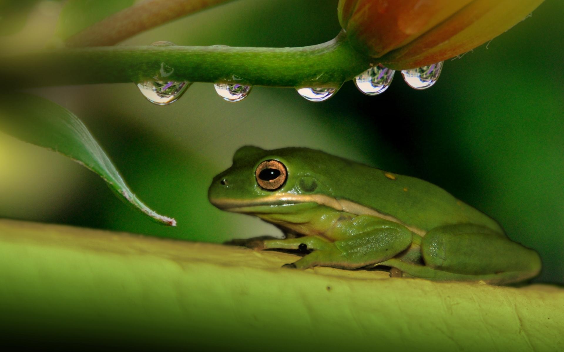 Картинки на рабочий стол жабы