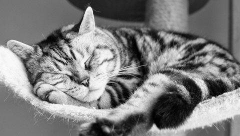 Кошка, лежа, спящая, полосатая, черно-белая