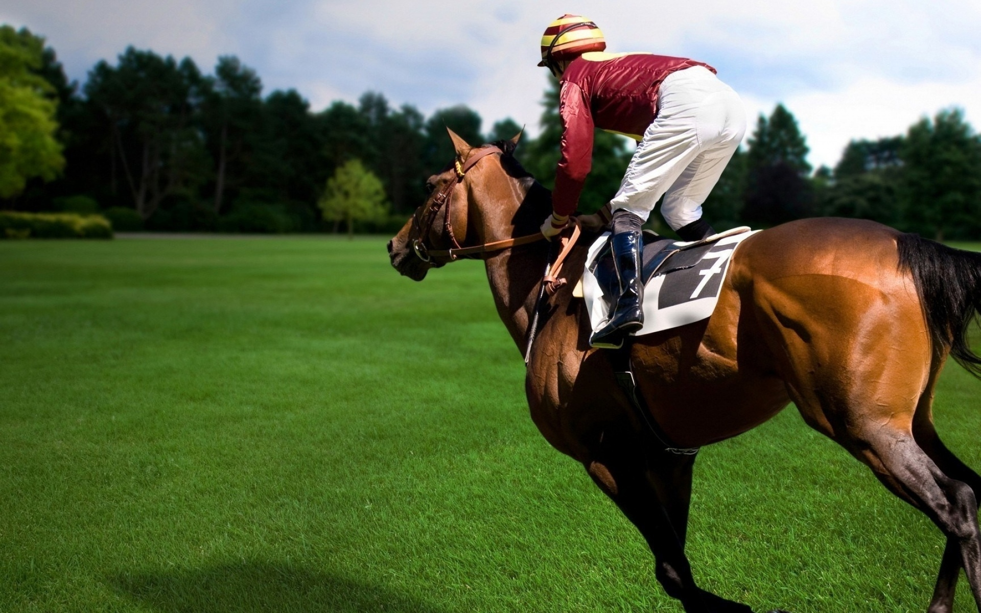 Лошади и всадники картинки