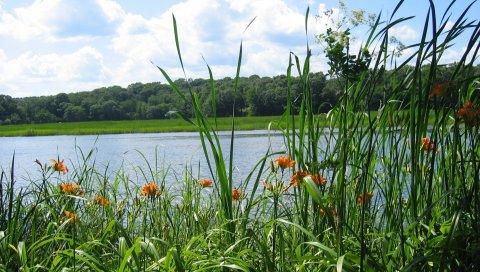 Река, лес, трава, природа