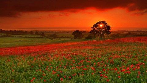 Осень, солнце, цветы, оранжевый, красный