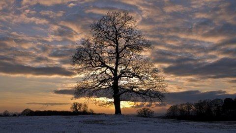 Зима, снег, поле, деревья, вечер, закат, небо, облака