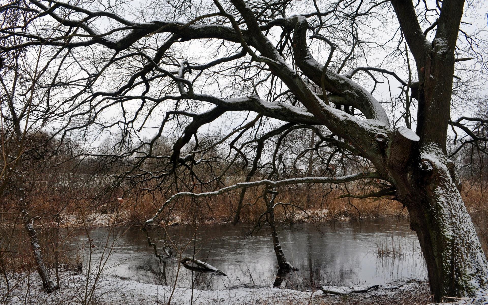 Картинки Дерево, река, снег, зима фото и обои на рабочий стол