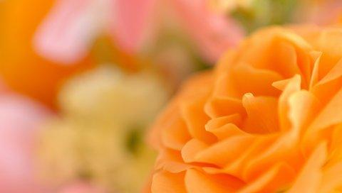 цветок, лепестки, боке