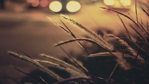 трава, огни, макро, отражение