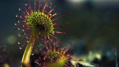 Растение, хищник, плотоядное животное