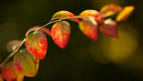Листья, растение, ветка